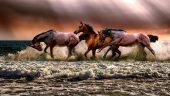 Álmaink lova Az álmok üzenete 78 Minden Nap Alap