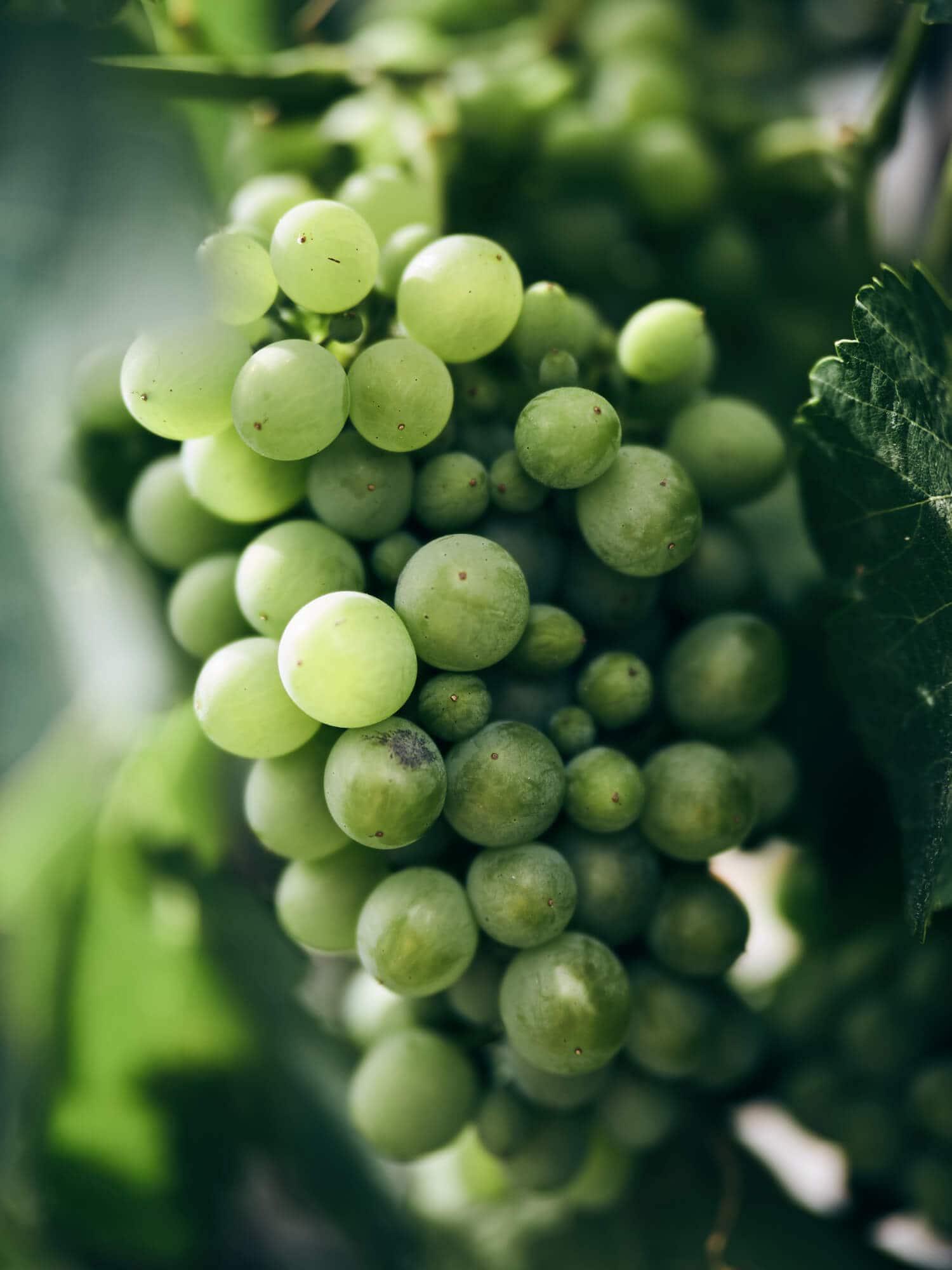 Obst und Gemüse vom Biolandhof Fetz