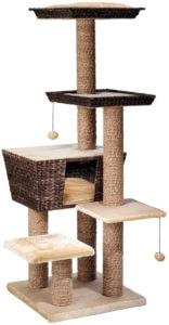 arbre à chat osier curacao