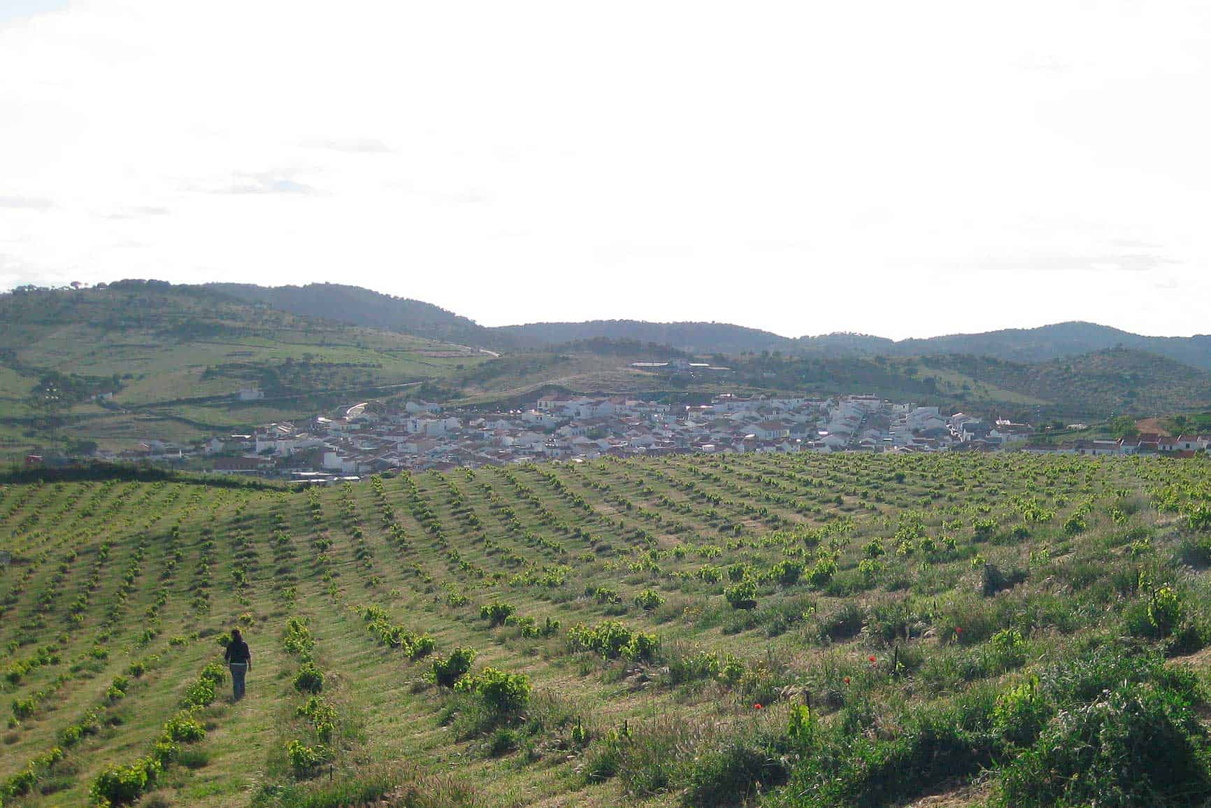 Bodegas Gómez Nevado