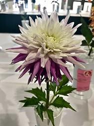image of flower at the Spokane fair
