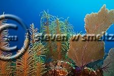 Underwater World (Steven W Smeltzer)