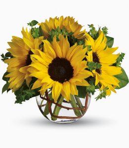 sunnysunflowers
