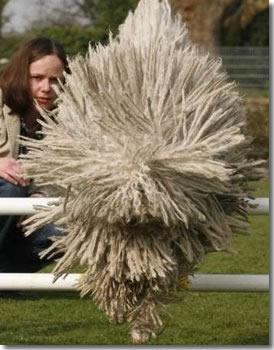 Dog or Mop