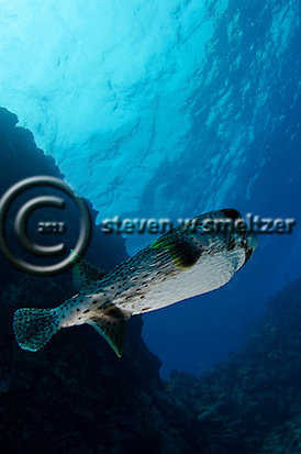 Creatures of the Coral Reef (Steven W Smeltzer)