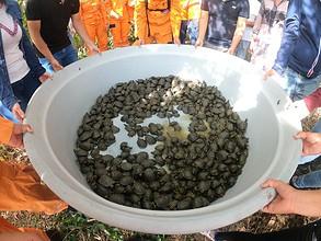 Photo of 700 tortugas fueron liberadas en La Macarena