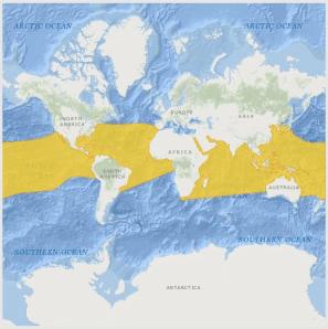 Oceanic Manta Ray Range