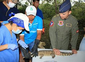 Photo of Caimanes llaneros serán liberados en el Parque Nacional el Tuparro por la Fuerza Aérea