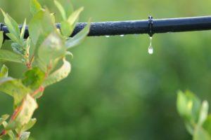 Irrigazione a goccia orto