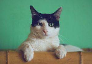 serious cat look