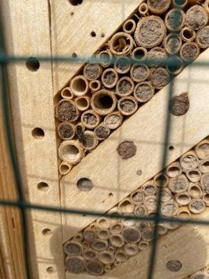 Verschlossene Nistgänge Wildbienenglück Mauerbienen