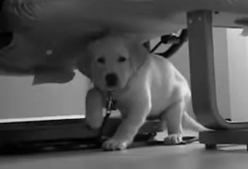 Puppy In Training TV – Ep 18 – Puppy Turn In Day