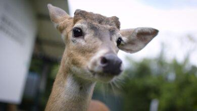 Photo of Corporinoquia liberará animales silvestres el día de la Biodiversidad