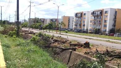 Photo of Asamblea convoca a involucrados en el arboricidio en ronda del canal de la Marginal del Llano
