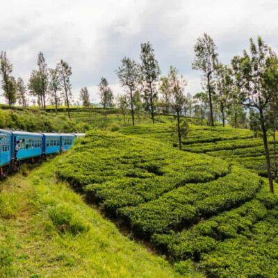 Negombo to Kandy by train