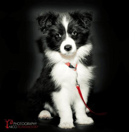 Come fotografare gli animali domestici