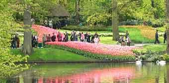 keukenhof_flower_spring_garden
