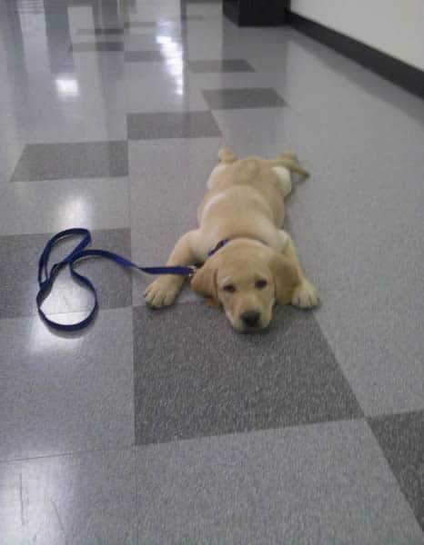 Puppy Dublin in the hallway