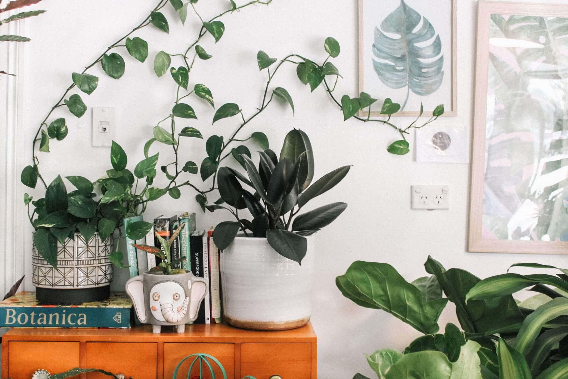 Planten: veel meer dan decoratie alleen