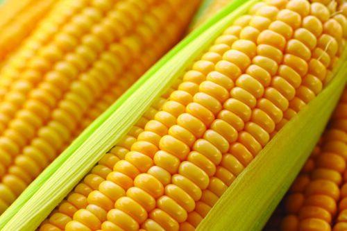 Grains,Of,Ripe,Corn