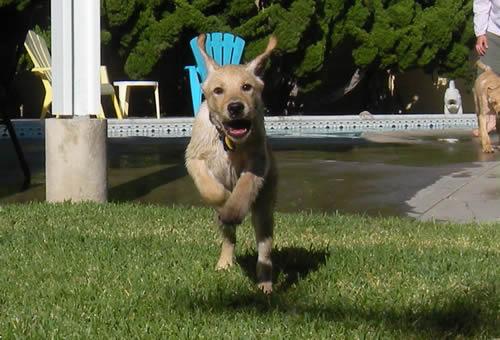 Wet Dog Needs To Be Brushed