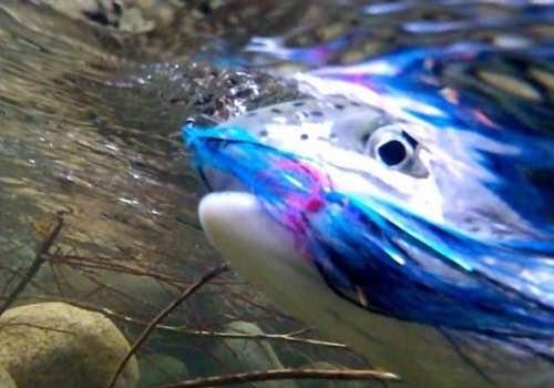 January Fishing BC