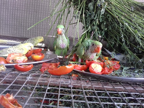Parrots on the way to triveni