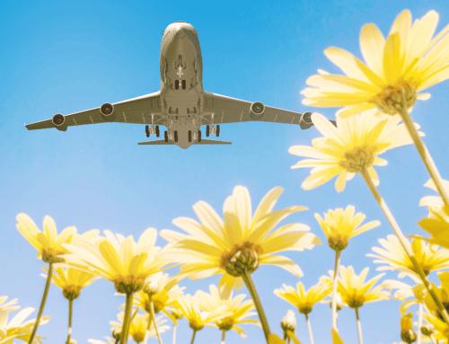 Our Favorite Summertime Destinations