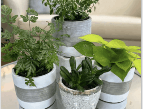 Celebrating the Health and Wellness Benefits of Plants