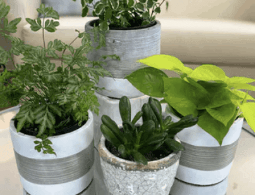 Get Ready for National Indoor Plant Week with Pugh's Plant Collection
