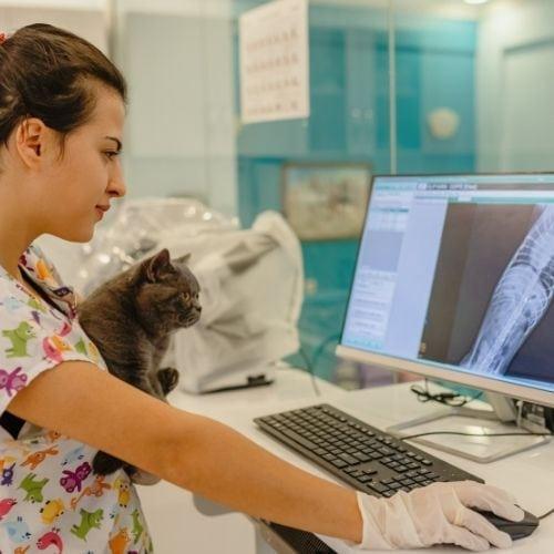 Veterinary radiology technician salary