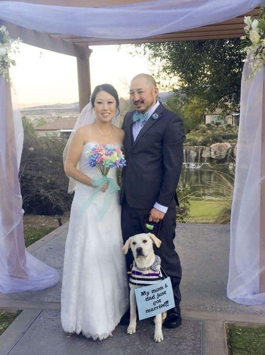 Should My Dog Be In My Wedding?