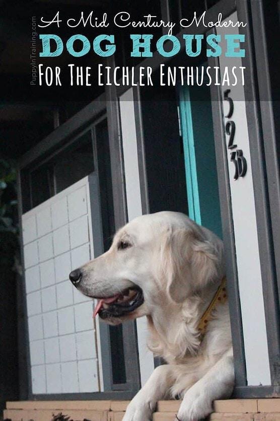 Raven likes her Eichler dog house better than the real Eichler!