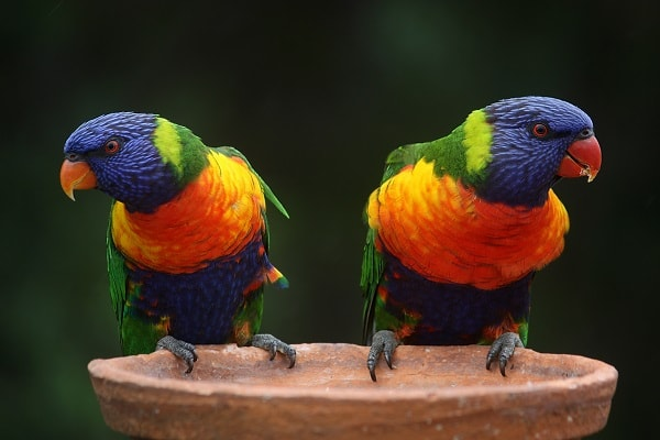 colorful birds in morning