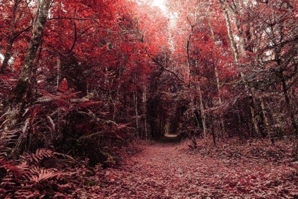 accessori per la fotografia creativa infrarosso