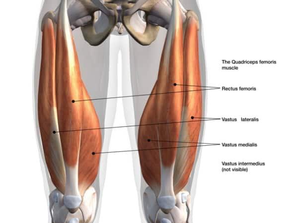 Quadrizeps Front Squat