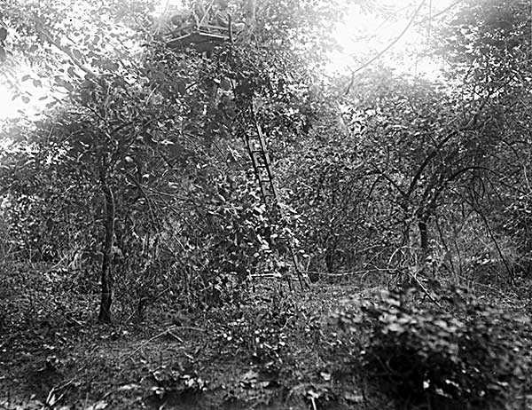 Old photographic glass plate showing the hunting platform in the trees
