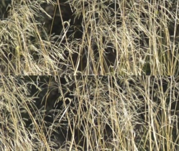 Differenti bitrate (18vs65) nella ripresa video con una Nikon d7000 nella risoluzione 670x568
