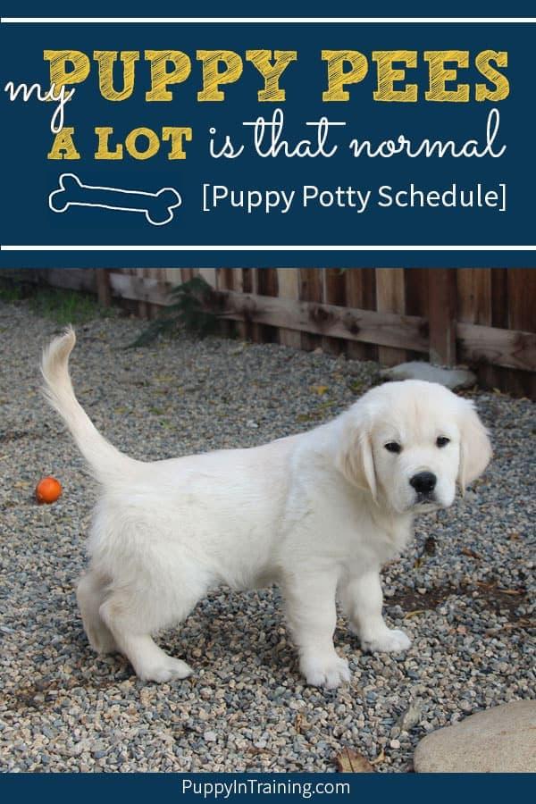 little puppy going potty on gravel