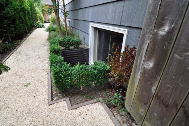 corrugated metal basement window well with decorative bushes around