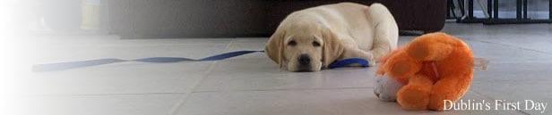 Formal Guide Dog Training