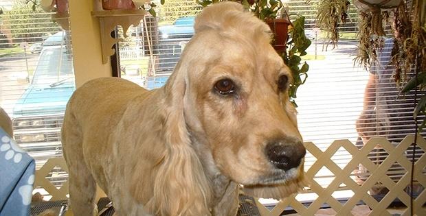 hilarious dog haircut