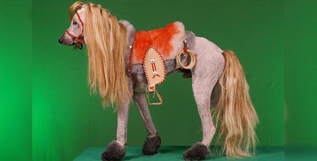 awful dog horse-like hairstyle