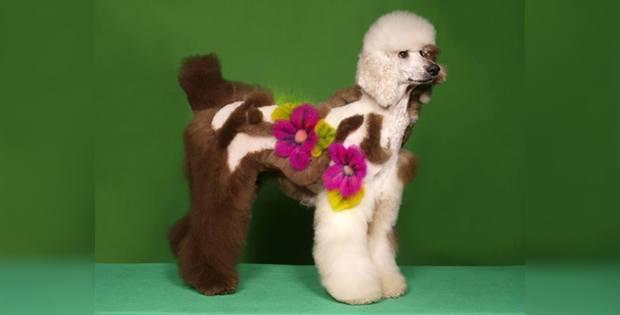Creative dog haircut