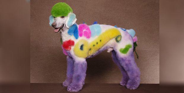 Creative dog hairstyle