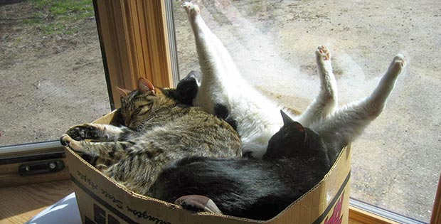 Cats sleeping in a box