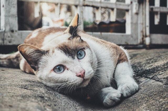 Accueillir un chat adulte