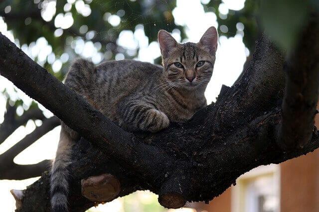 chat dans un arbre