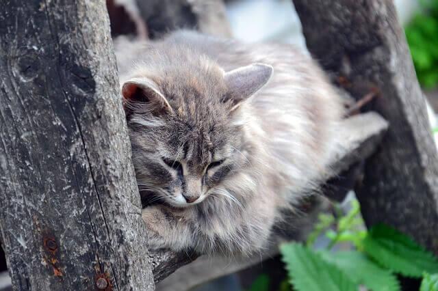 arbre à chat bois