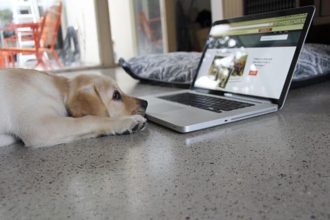 Pet Bloggers Beware The Hackers!!!